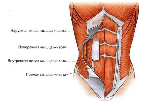Причина в том, что эти упражнения в большей степени затрагивают прямые и  косые (внешние и внутренние) мышцы живота. Прямые мышцы формируют рельеф,  ... f5199555b6d