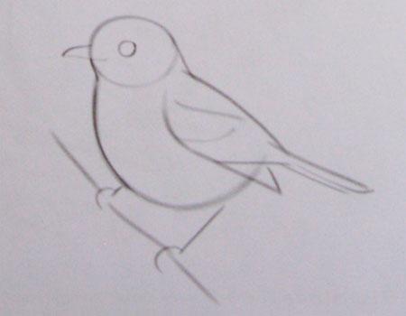 noha dlhé vtáky